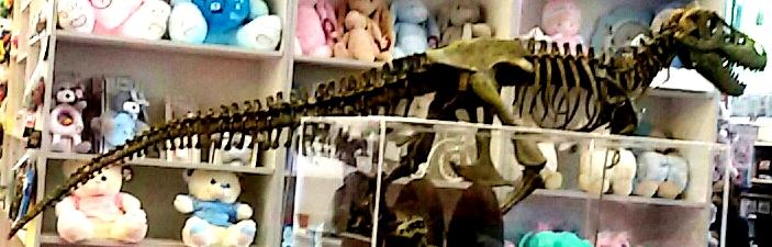 שלד-דינוזאור של-גוקר נציגויות צילום: יחצ