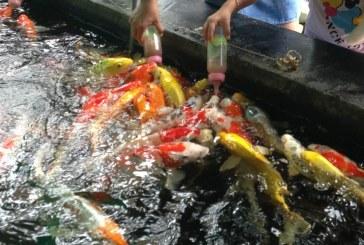עתלית: מאכילים דגים בבקבוק תינוקות